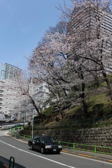 タクシーも春を乗せて走ってます☆【赤坂】 画像