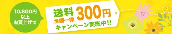 送料全国一律300円キャンペーン