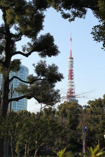 東京タワー発見☆【芝公園】 画像